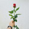 10 motivos para regalar flores